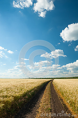 Free Ground Road In Wheaten Field. Royalty Free Stock Images - 53117919