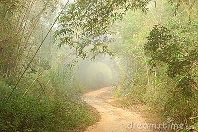 Ground road in jungle