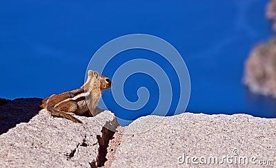Ground Squirrel enjoying View