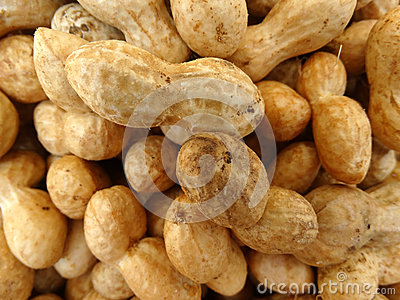 extraction of oil from groundnut seed pdf