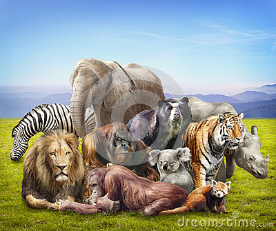 Group of animals