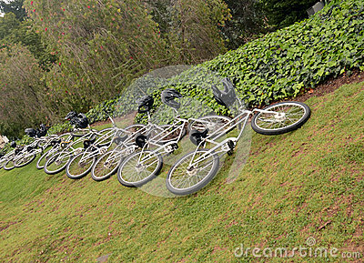Bicycles on a lawn