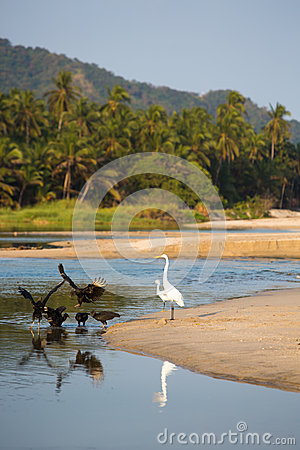 Group of birds on beach of Palomino