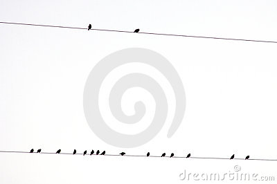 Group of birds on a electric wire with white sky