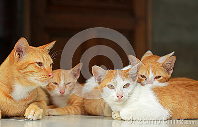 A group of brown cat