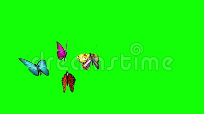 Group of Butterflies Flying Green Screen 3D Rendering Animation. Chroma key 3d animation