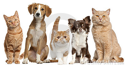 Group of cats and dogs in front of white