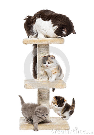 Group of cats playing on a cat tree, isolated
