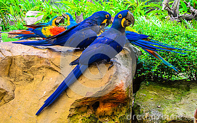 Group Of Colorful Macaw Birds Royalty Free Stock Photo - Image ... Group Of Colorful Birds