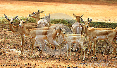 A group of deer