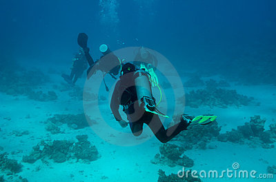 A group of divers drifts away from the camera