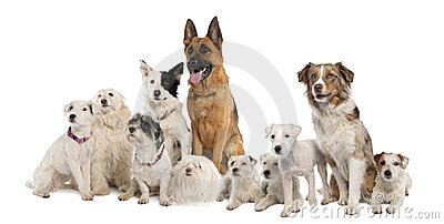 Group of dog : german shepherd, border collie, Par