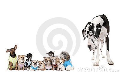 Group of dogs against white background