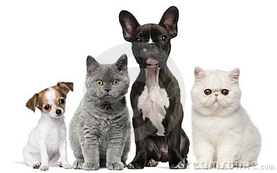 Group of dogs and cats in front of white