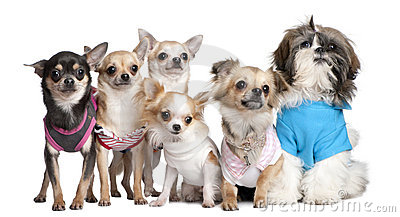Group of dogs dressed-up