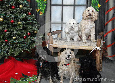 Group of dogs posing for their Christmas portrait