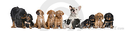 Group of dogs sitting in front of white background