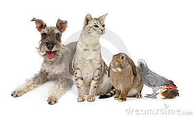 Group of Domestic Pets