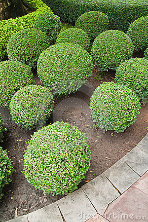 Group of dwarf tree