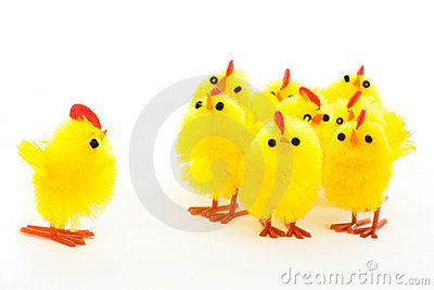 Group of easter chickens and one leader