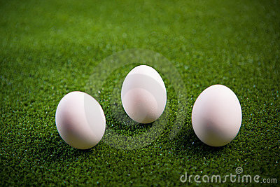 Group of eggs on the grass