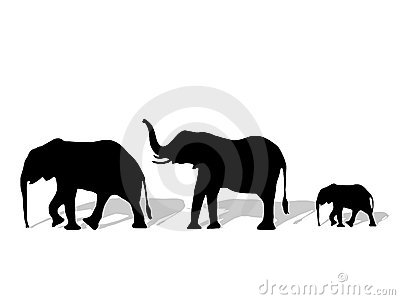 Group of elephant