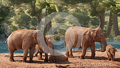 A Group of Elephants