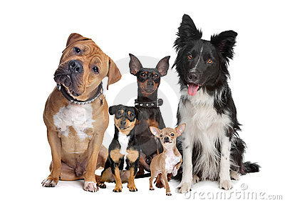 Group of five dogs
