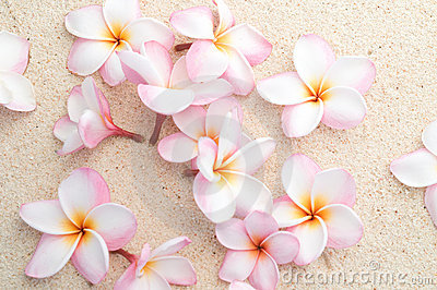 Group of Frangipani on beach