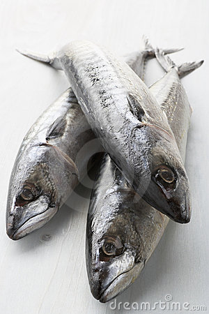 Group Of Fresh Mackerel
