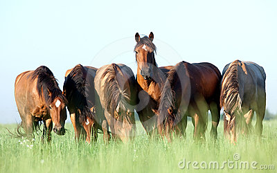 Group of horses in field