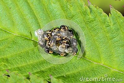 Group of larvae