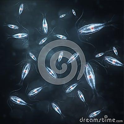 Group of marine planktonic copepod