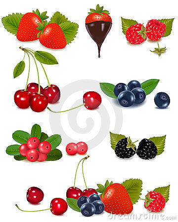 Free Group Of Berries And Cherries. Vector Stock Images - 21426414