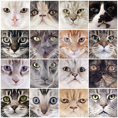Free Group Of Cats Royalty Free Stock Images - 35515509