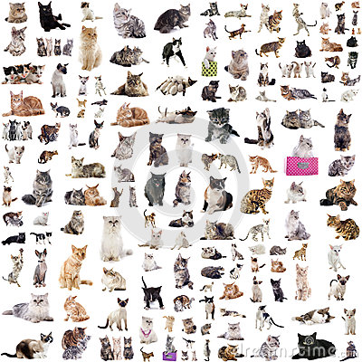 Free Group Of Cats Royalty Free Stock Image - 37444876