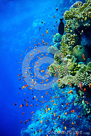 Free Group Of Coral Fish  Water. Stock Photos - 30021333