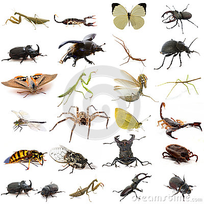 Free Group Of European Insects Royalty Free Stock Image - 97012856