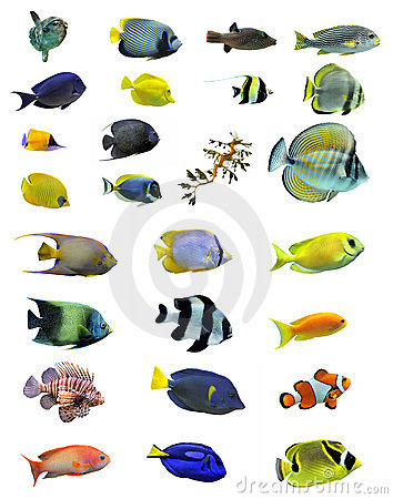 Free Group Of Fishes Stock Image - 18824271