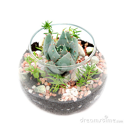 Free Group Of House Plants In A Round Glass Pot. Stock Photos - 29314003