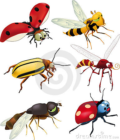Free Group Of Insects Stock Photos - 14404743