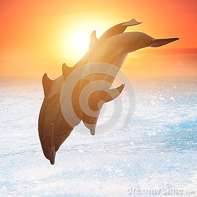 Free Group Of Jumping Dolphins Stock Photos - 44192363