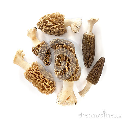 Free Group Of Morel Mushrooms Stock Image - 40495911