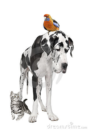 Free Group Of Pets : Dog, Bird, Cat Stock Photography - 10049752