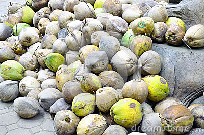 Group of old coconuts