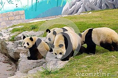 pandas group by count distinct
