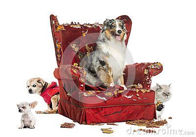 Group of pets on a destroyed armchair, isolated
