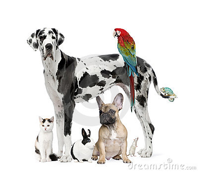 Group of pets - Dog,cat, bird, reptile, rabbit