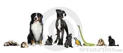 Group of pets - Dog, cat, bird, reptile, rabbit, f