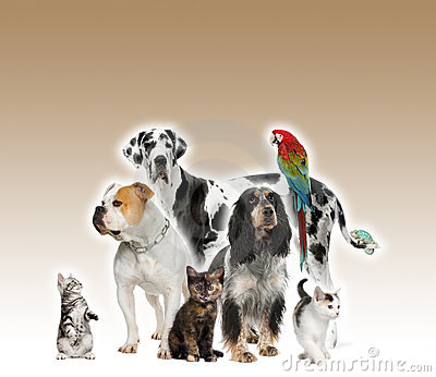Group of pets standing agaisnt brown background